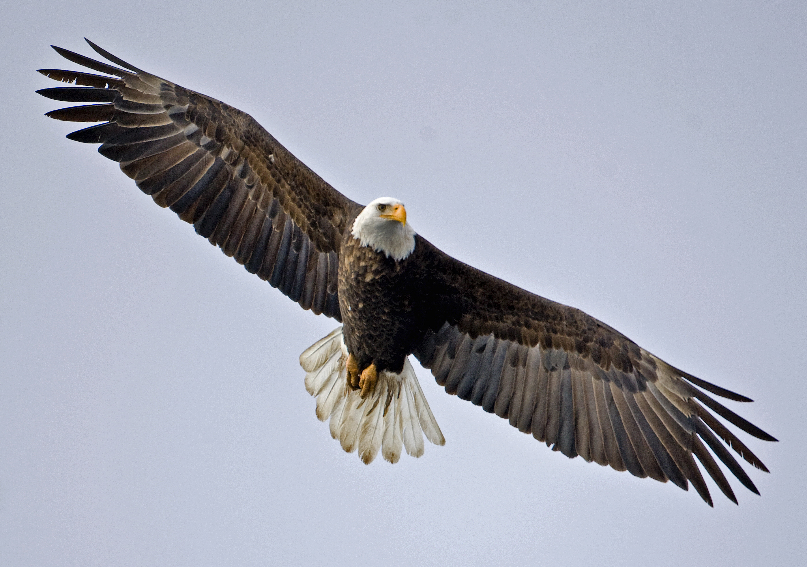 BALD EAGLE FACTORS INTO DELAWARE DEVELOPMENT PLAN | Craftsmen Developers